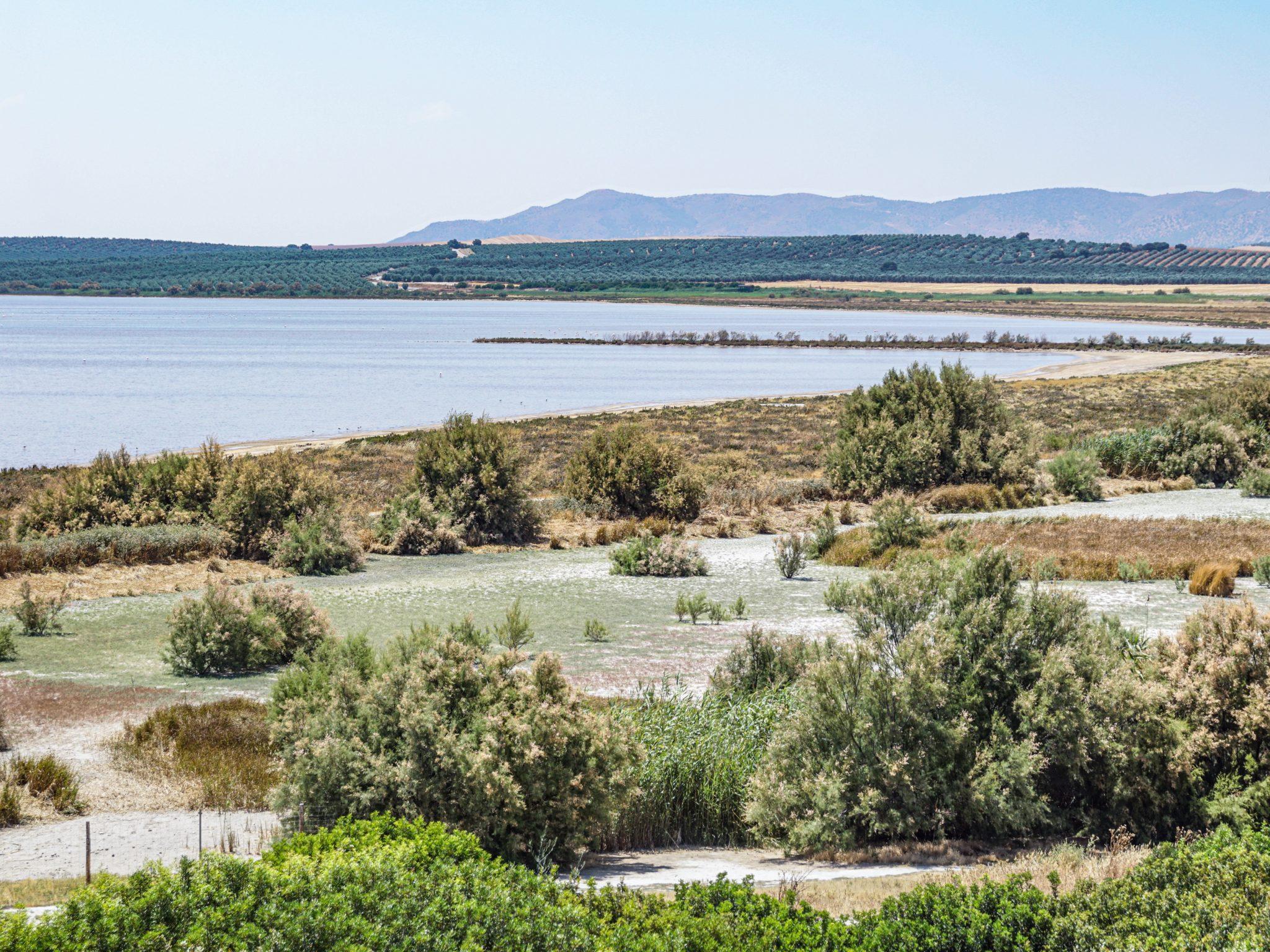 Laguna de Fuenta de Piedra